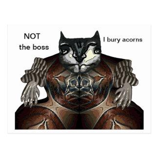 NOT the boss - I bury acorns Postcards