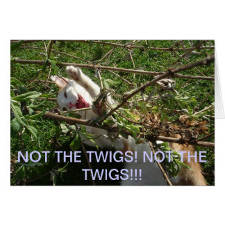 NOT THE TWIGS KITTY! GREETING CARD