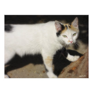 Not Very Friendly Cat Que Me Ves Poster