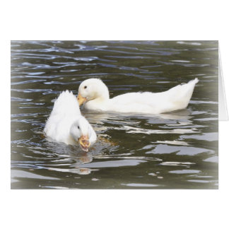 Note Card: Aylesbury Ducklings Card