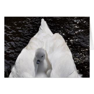 Note Card: Cygnet on Swan's Back Card