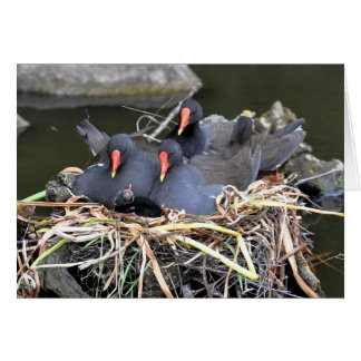 "Note Card: ""four in a bed"" Moorhens Card"