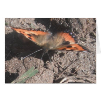 Note Card Hairy Butterfly Dirt Foraging