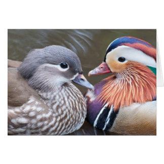 "Note Card: ""Love Ducks"": Mandarin Ducks Card"