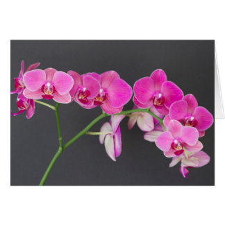 Note Card, Magenta Moth Orchid Spray of flowers Card
