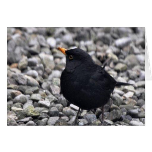 Note Card: Male Blackbird