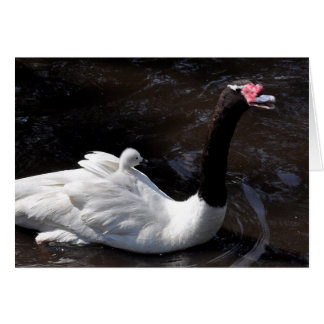 Note Card: Male Blackneck Swan and Cygnet