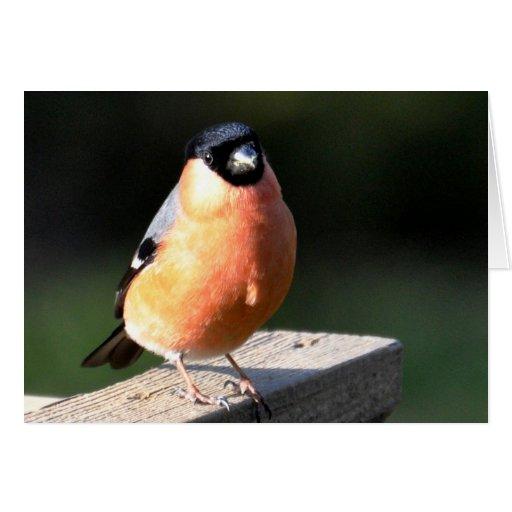 Note Card: Male Bullfinch