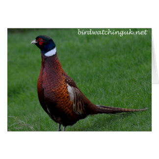 Note Card: Male Pheasant at Falls of Holm