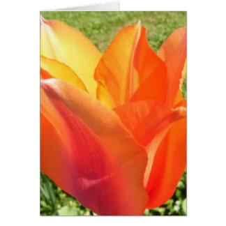 Note Card - Orange-Red Tulip 1