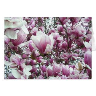 Note Card - Saucer Magnolia