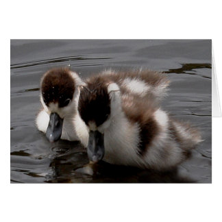 Note Card: Shelduck Chicks 4 Card