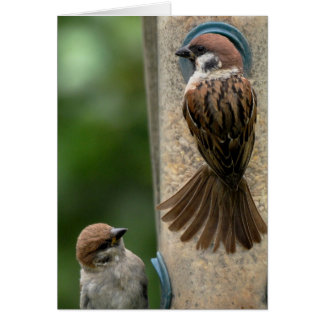 Note Card: Tree Sparrows on Feeder Card