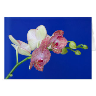 Note Card, with Moth Orchid Spray striped flowers Card