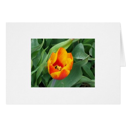 Note Card With Tulip Photo