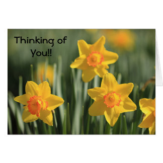 NOTE CARD - Yellow Daffodils - Thinking of You!!