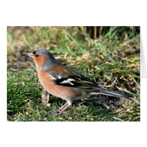 Note Cards: Male Chaffinch