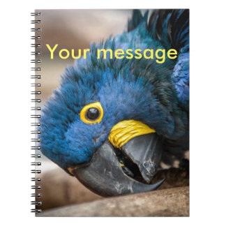 Notebook cute blue Hyacinth Macaw parrot