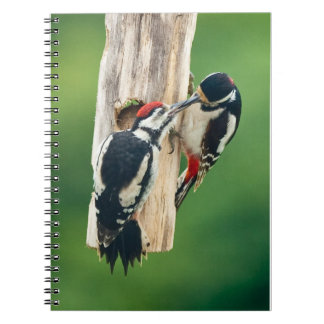 Notebook Great Spotted Woodpecker feeding juvenile