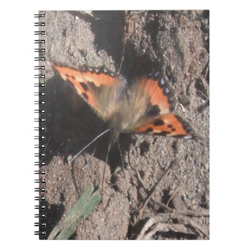 Notebook Hairy Butterfly Dirt Foraging