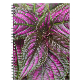 Notebook - Persian Shield