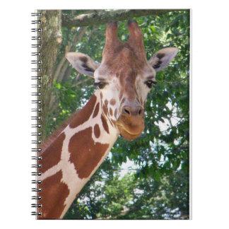 Notebook, Photo of Giraffe Notebooks