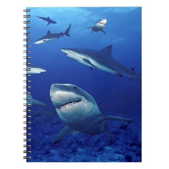 Notebook-Sharks Spiral Notebook
