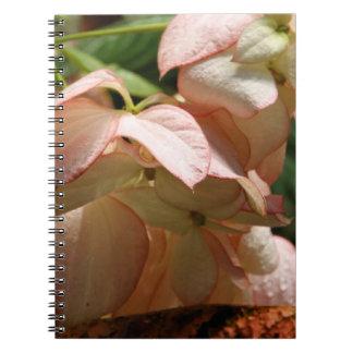 Notebook - Strawberry Splash Taffet Plant