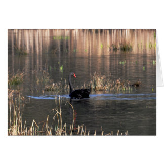 Notecard: Black Swan at Rodley Note Card