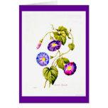 Notecard-Botanicals-Pierre Joseph Redoute 6 Cards