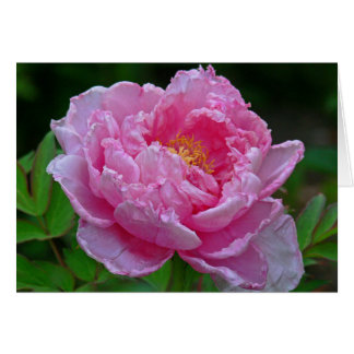NOTECARD CANDY- PINK COLORED PEONY PHOTOG GREETING CARD