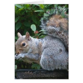 Notecard: Feeding Grey Squirrel Card