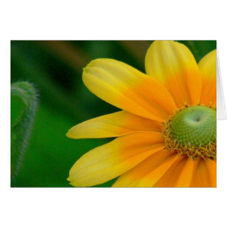 Notecard, Floral Photo Blank Inside Greeting Card