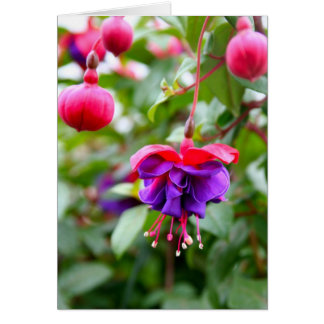 Notecard Fuschia