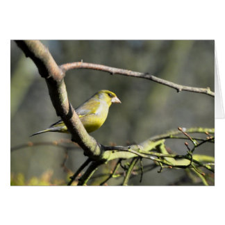 Notecard: Male Greenfinch Note Card