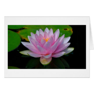 notecard /PINK LOTUS BLOSSOM Note Card