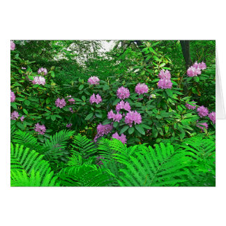 NOTECARD RHODODENDRON FERNS PHOTOG GREETING CARD
