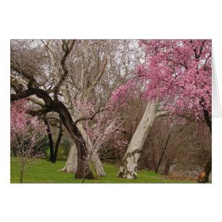 NOTECARD ~ Springtime in Chico, CA