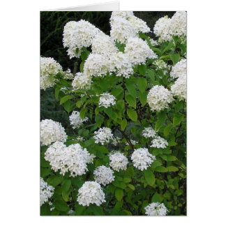 "notecard, ""White Hydrangea"" photography Note Card"