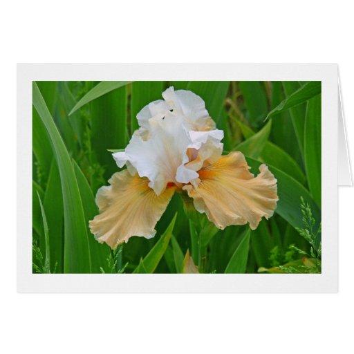 "NOTECARD, ""WHITE & PEACH COLORED IRIS"" (PHOTOG) GREETING CARD"