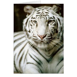 Notecard White Tiger