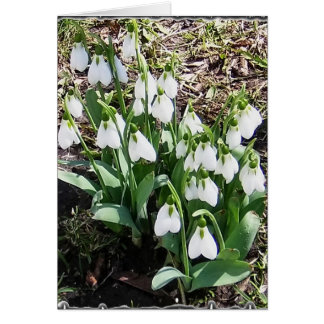 Notecard with Snowdrops! Stationery Note Card