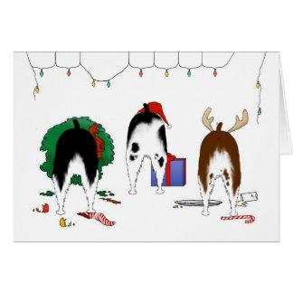 Nothin' Butt A Springer Christmas Card