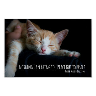 Nothing Can Bring You Peace Sleeping Cat Poster