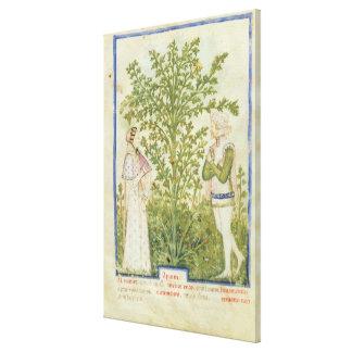 Nouv Acq Lat Celery, from 'Tacuinum Sanitatis' Canvas Print