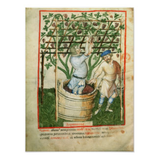 Nouv Acq Lat Gathering and pressing grapes Poster