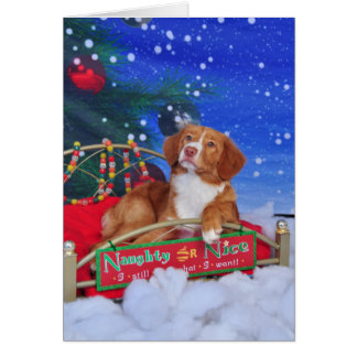 Nova Scotia Duck Tolling Retriever Christmas Card