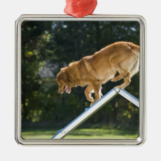 nova scotia duck-tolling retriever christmas ornament