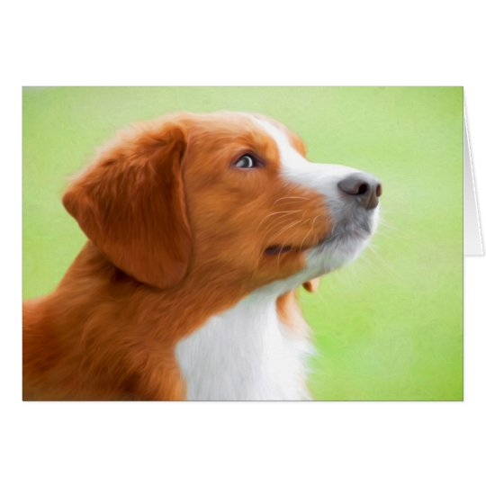 Nova Scotia Duck Tolling Retriever Greeting Cards