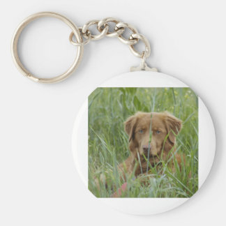 Nova Scotia Duck Tolling Retriever Key Ring